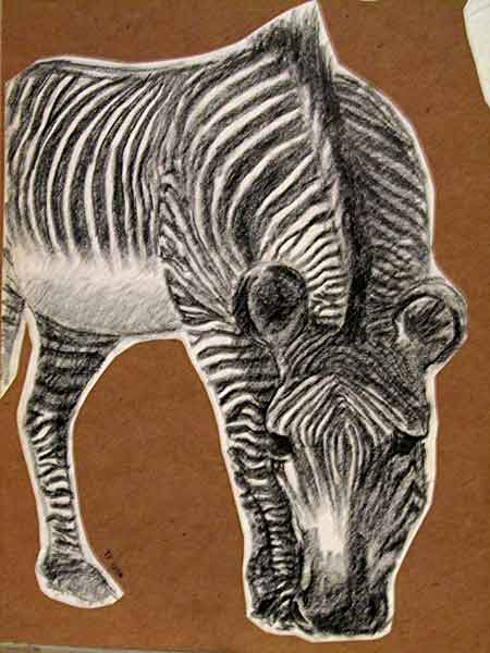 animal scetch – pencil